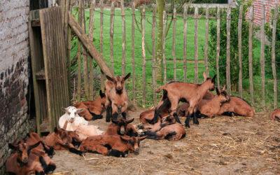Stage de printemps à la Chèvrerie de Vissoul